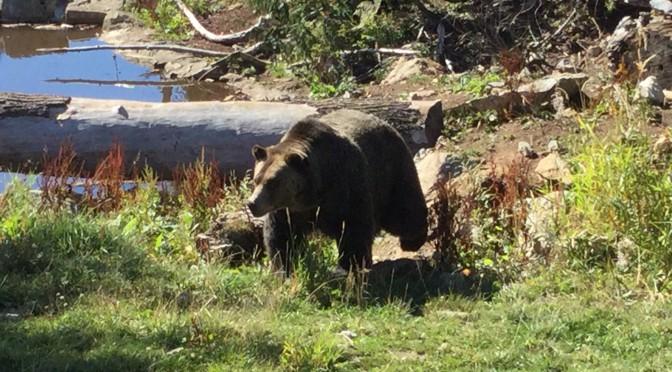 Mein erster Bär